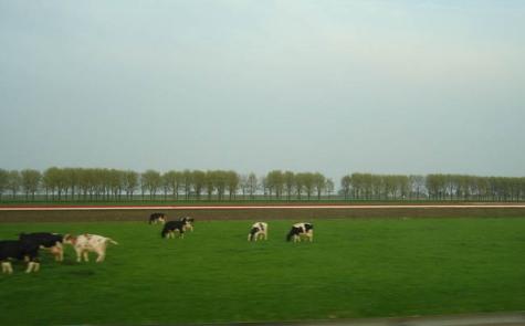 Holanda_2.jpg