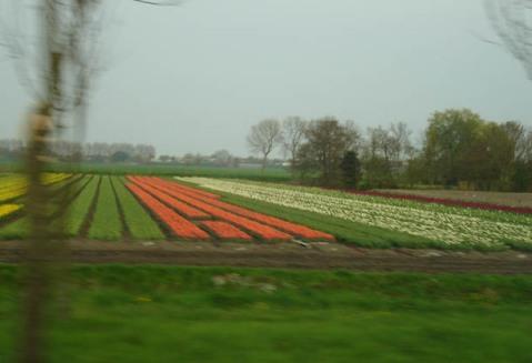 Holanda_6.jpg