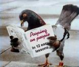 Pigeon20Poop.jpg